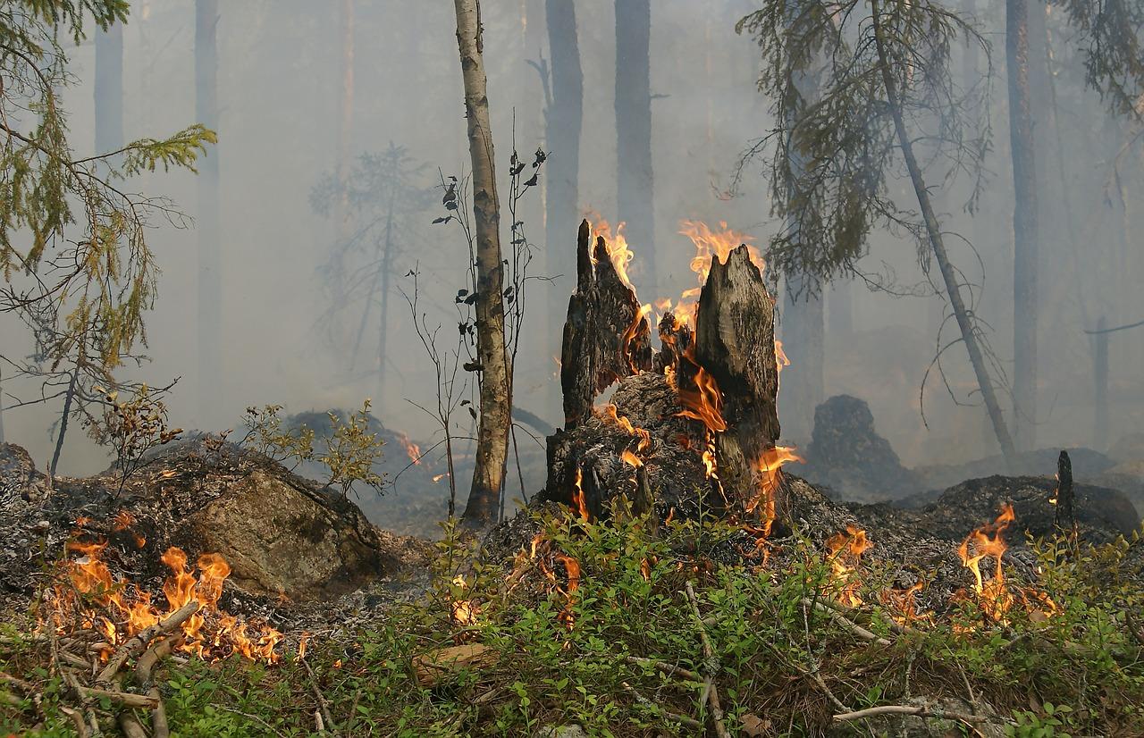 Waldbrandgefahrenstufe